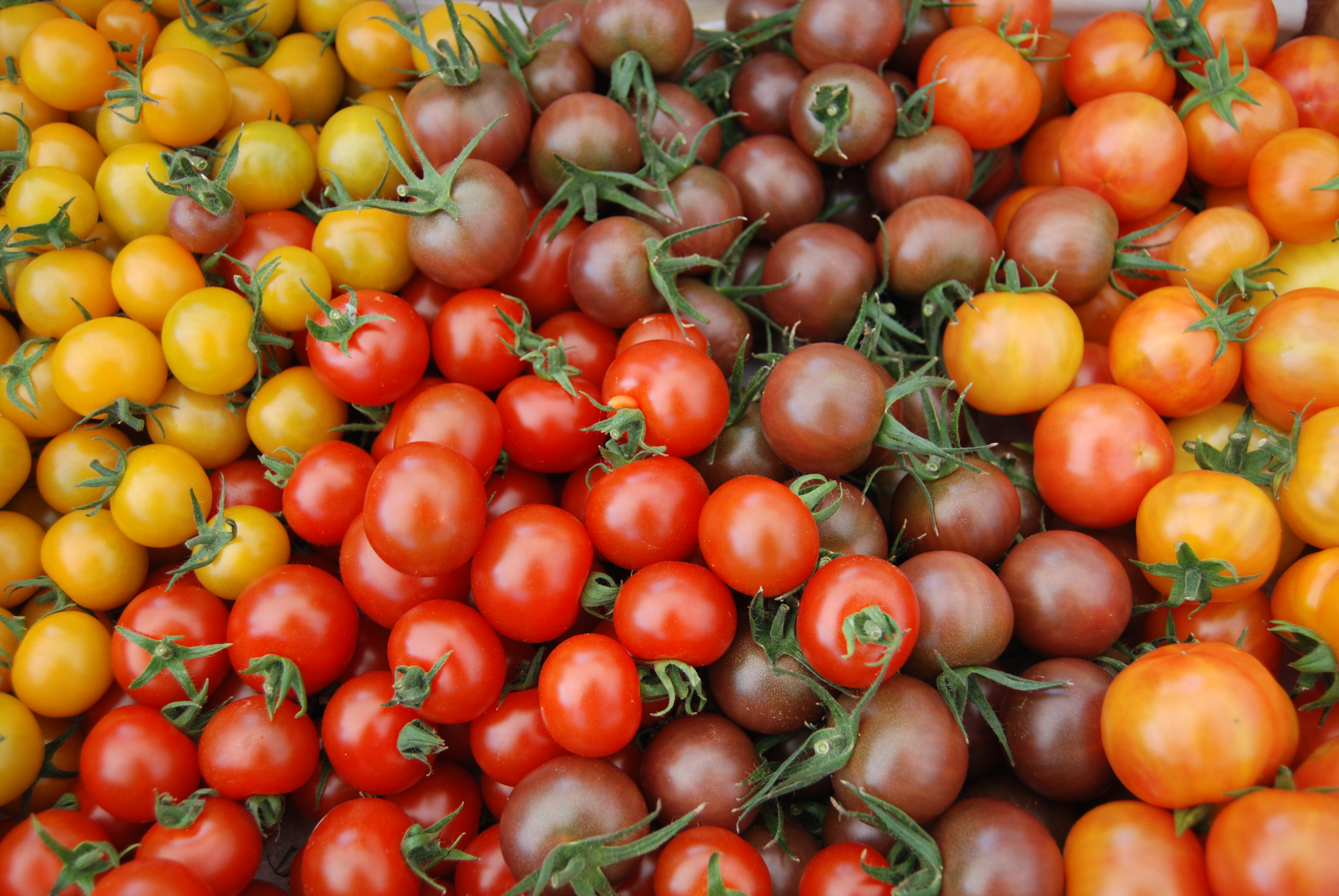mixed medley cherry tomatoes