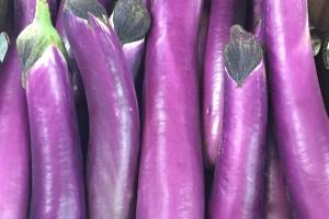 chinese eggplant