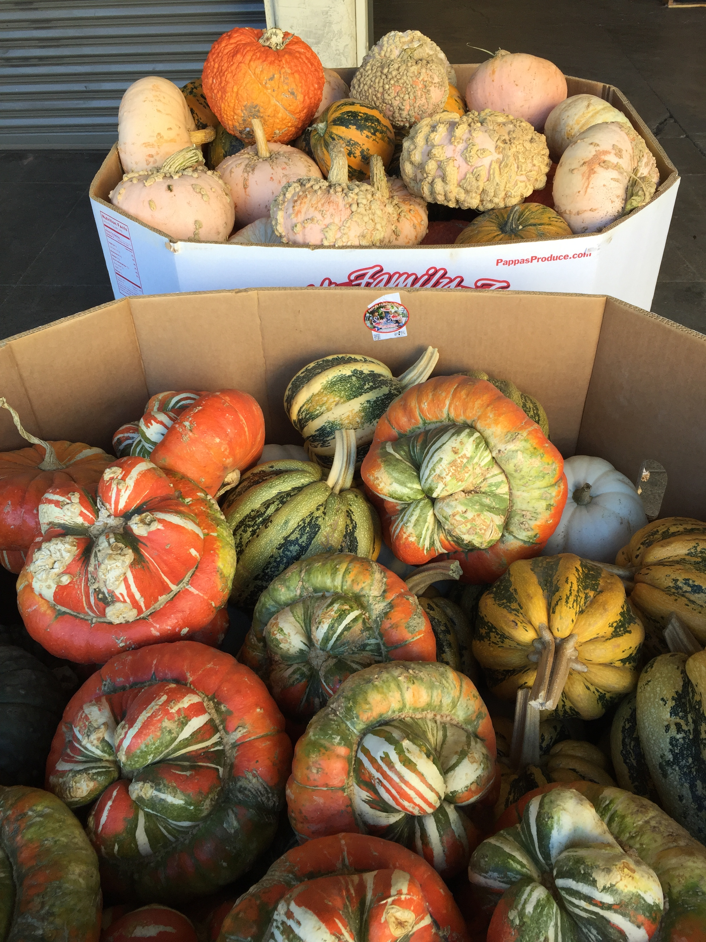 GORGEOUS Gourds!!