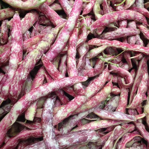cranberry beans